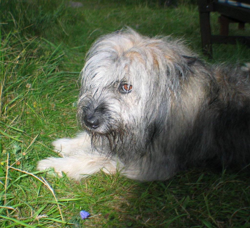 Olaf Hansen's dog? It's really my parent's Rita!